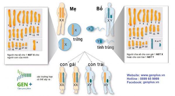 Xét nghiệm ADN huyết thống độ chính xác bao nhiêu ?
