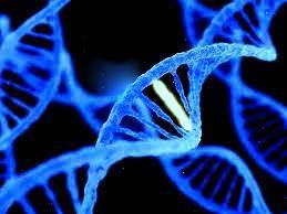 xét nghiệm ADN cha con
