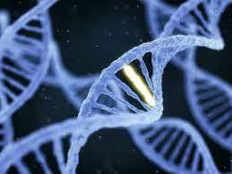 ADN là thông tin di truyền ở người
