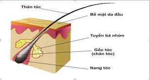 Tóc thường được dùng để xét nghiệm ADN