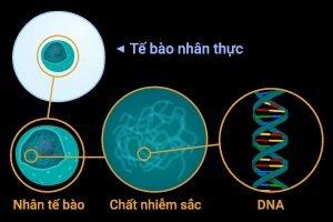 LỢI ÍCH CỦA XÉT NGHIỆM ADN: HUYẾT THỐNG, SỨC KHỎE, XÁC ĐỊNH TỔ TIÊN